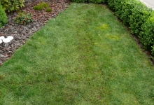 vzhled trávníku po usazení drnů